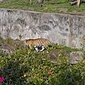 20150314-天王寺動物園-09.jpg