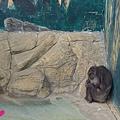 20150314-天王寺動物園-15.jpg