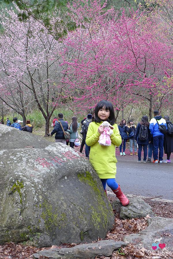 20160219-武陵賞櫻36.jpg