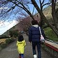 20160219-武陵賞櫻20.jpg
