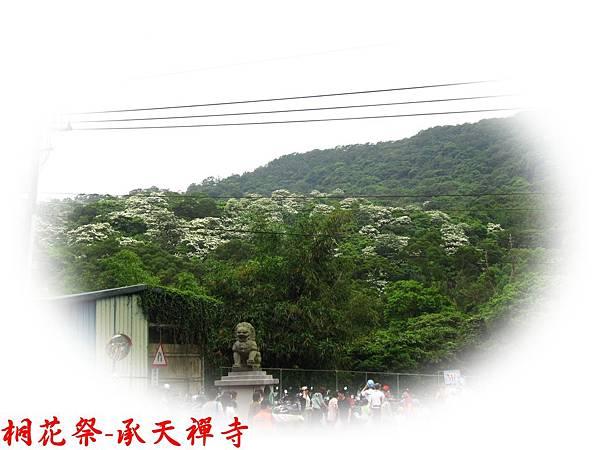 桐花祭承天禪寺 02