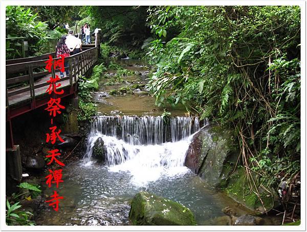 桐花祭承天禪寺 07