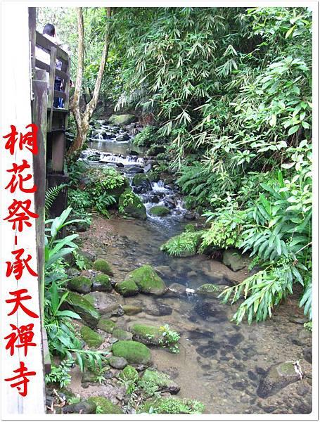 桐花祭承天禪寺 08