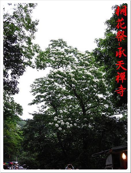 桐花祭承天禪寺 13