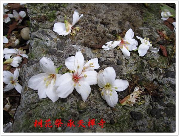 桐花祭承天禪寺 14