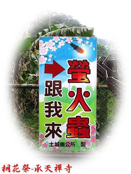 桐花祭-承天禪寺11