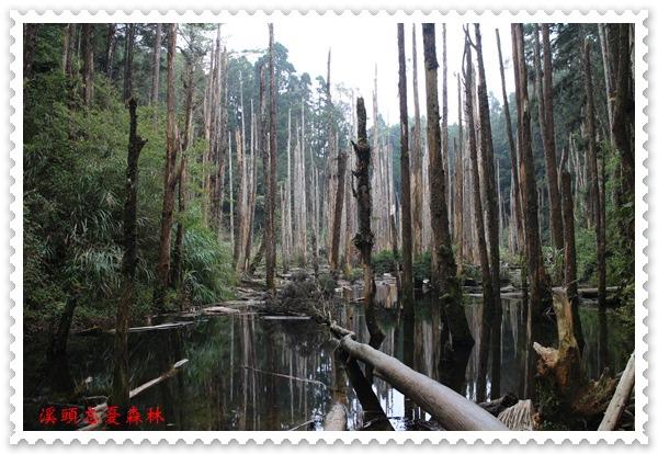 溪頭忘憂森林之旅 18