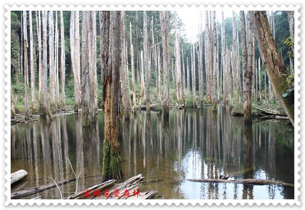 溪頭忘憂森林之旅 28