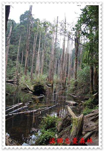 溪頭忘憂森林之旅 26