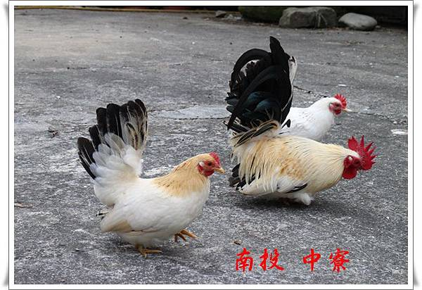 南投 中寮 04