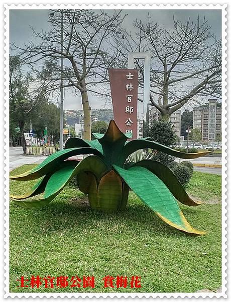 士林官邸公園賞梅花 01