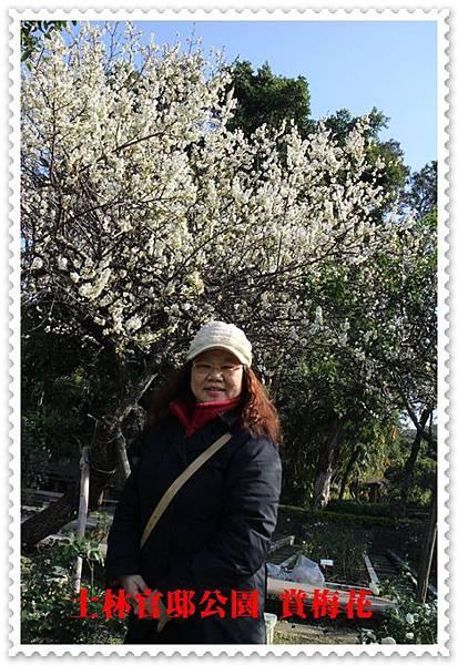 士林官邸公園賞梅花 22