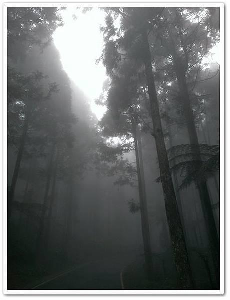 溪頭自然教育園區 03