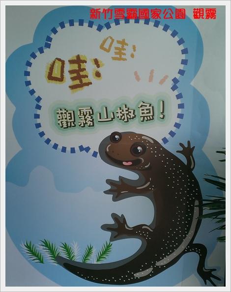 新竹雪霸國家公園 觀霧 24