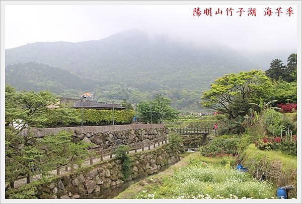 陽明山竹子湖海芋季 02
