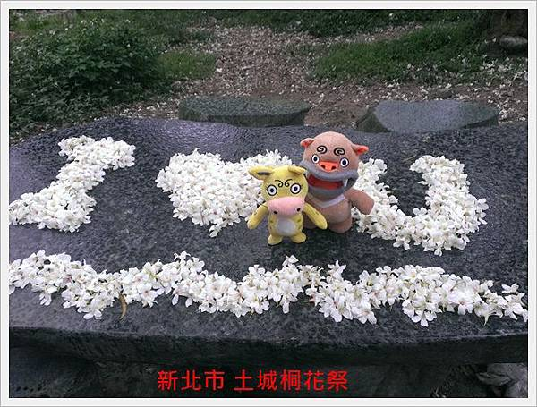 新北市土城桐花祭 02