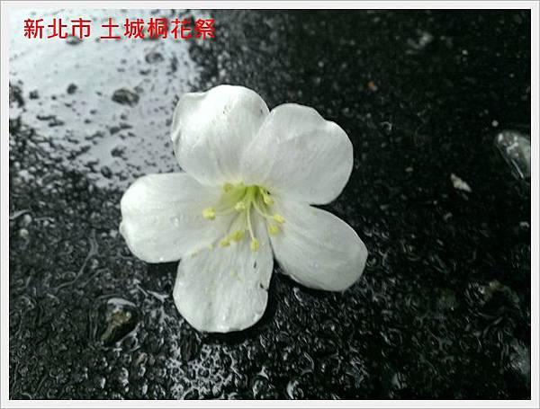 新北市土城桐花祭 09