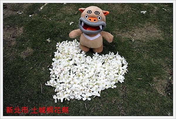 新北市土城桐花祭 17