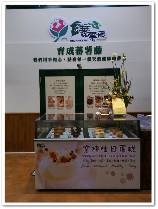 育成蕃薯藤 09