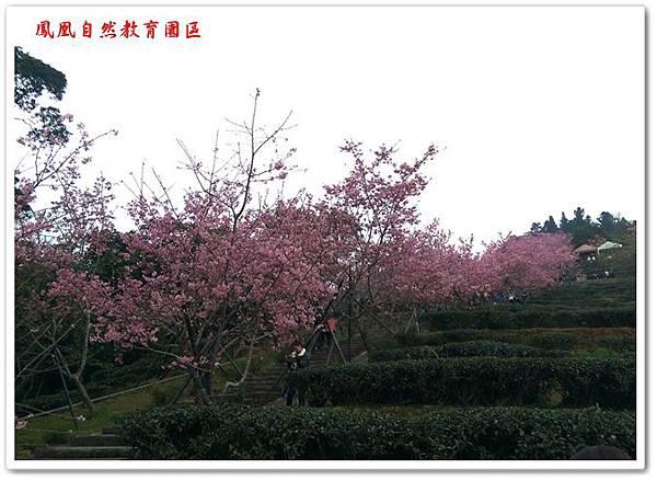 台大茶園 09