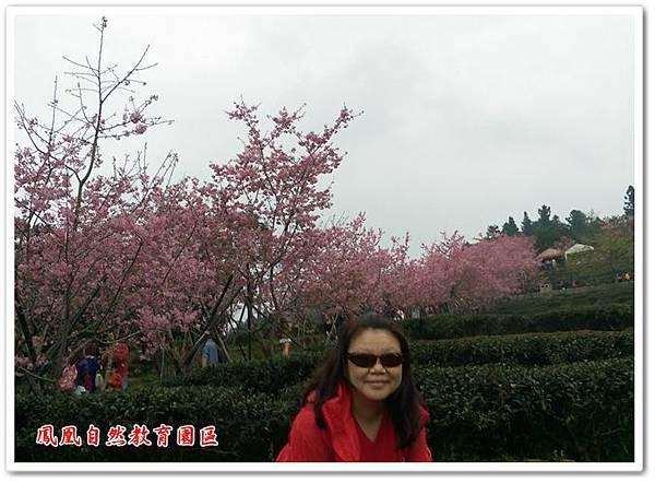 台大茶園 12
