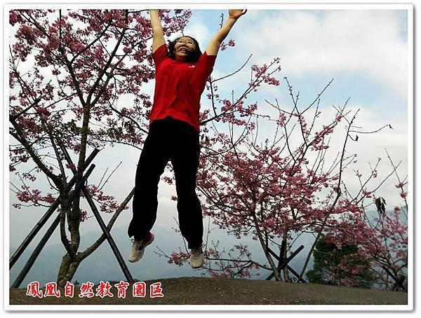 台大茶園 29