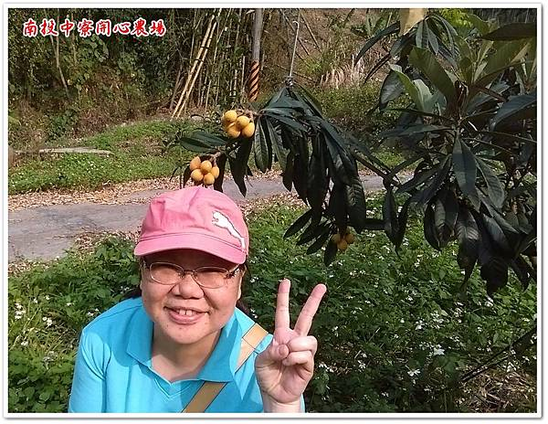 南投中寮開心農場  07