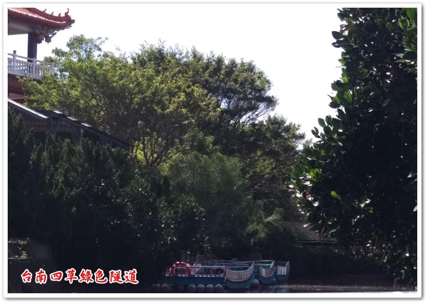 台南四草綠色隧道 07