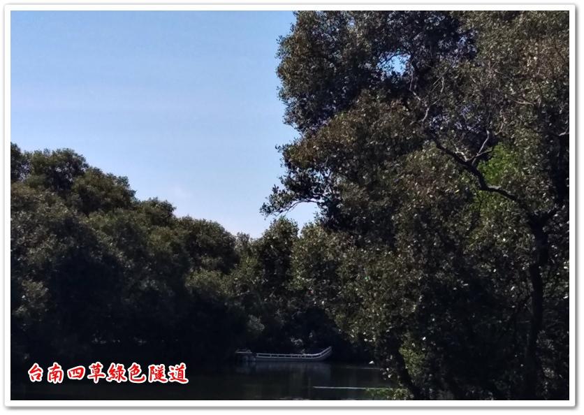 台南四草綠色隧道 09