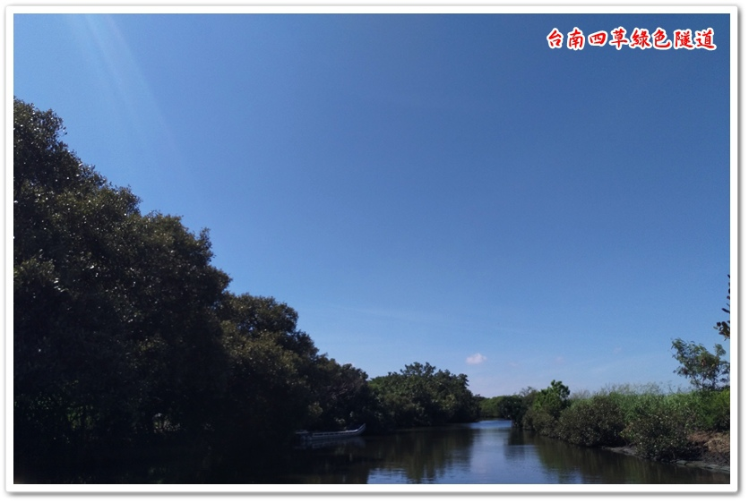 台南四草綠色隧道 11