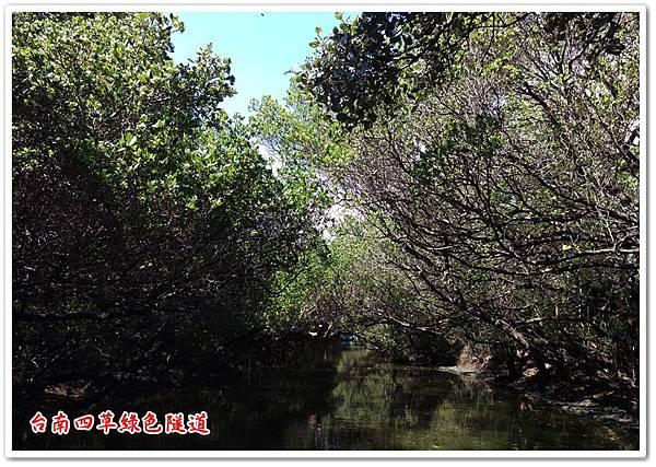 台南四草綠色隧道 18