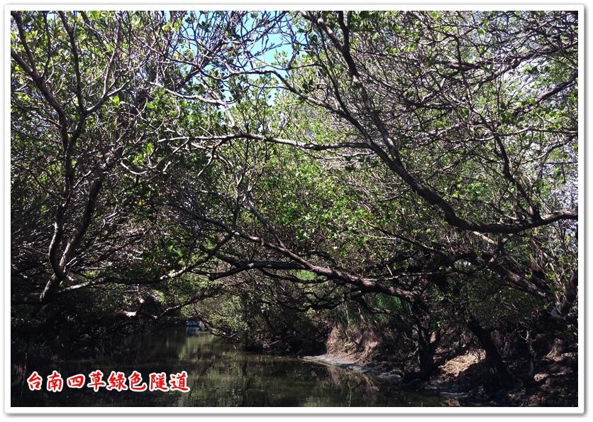 台南四草綠色隧道 19