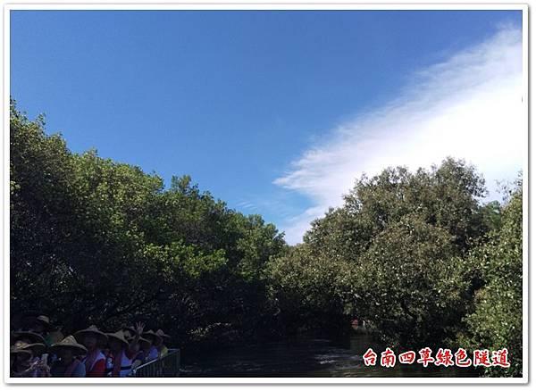 台南四草綠色隧道 20