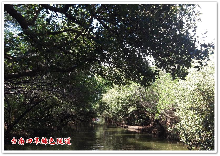 台南四草綠色隧道 21