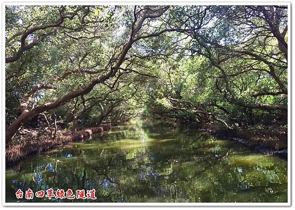 台南四草綠色隧道 23