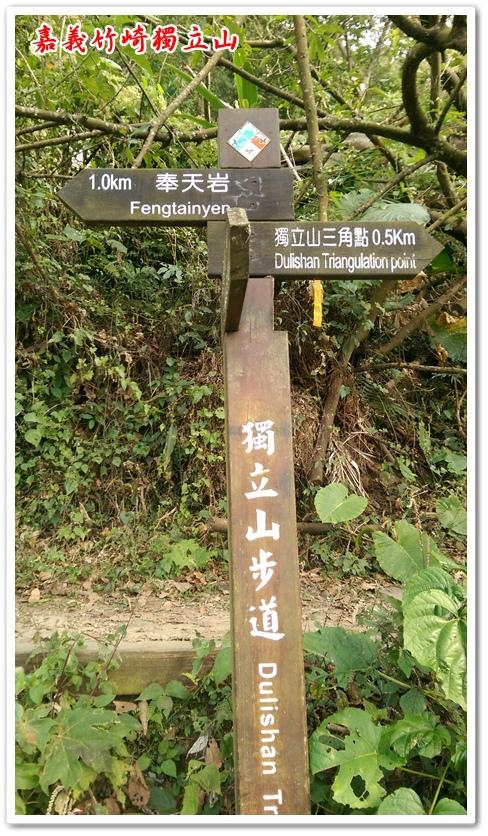 嘉義竹崎獨立山 13