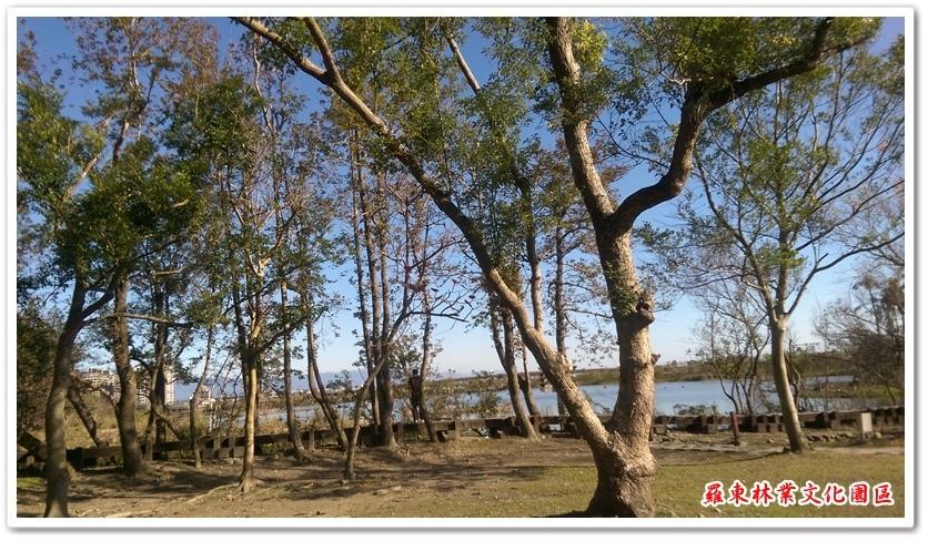 羅東林業文化園區 05