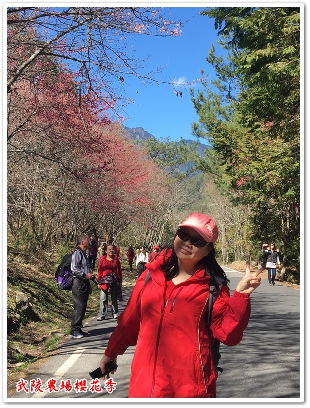 武陵農場櫻花季 27