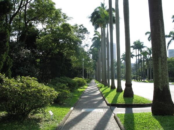 傍著椰子樹的小徑