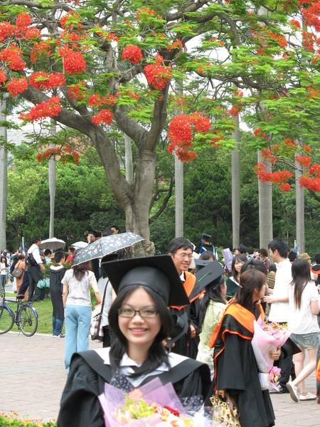 熱情的鳳凰樹,捎來畢業的哀愁