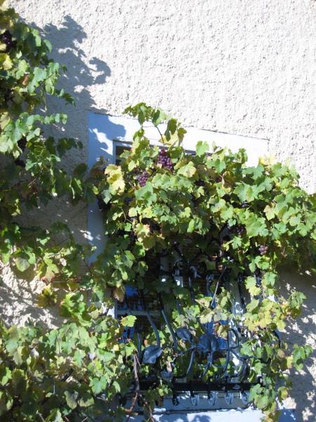 窗戶邊的小葡萄