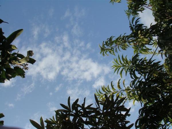 躺在草地上凝望天空,這是荔枝跟酪梨樹