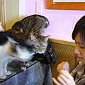 貓咪看到我們買了零食都圍過來啦.JPG