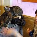 結果~有些貓咪不愛吃這種乾糧= =.JPG