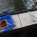 這是蝦蝦的餌