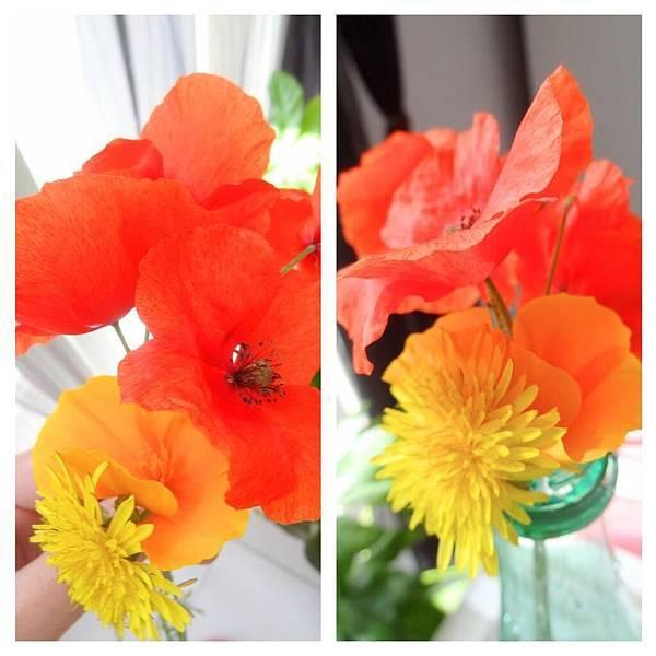 西蒙摘給我的花