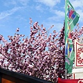 0417 Bonn Flohmarkt 跳蚤市場的花開得好漂亮