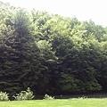 漂亮的草地