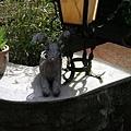 餐廳外的鹿!
