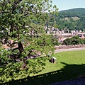 從城堡遠眺